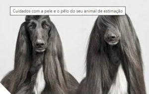 Cuidados com a pele e o pêlo do seu animal de estimação