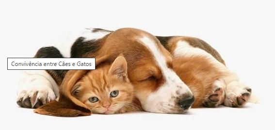 Convivência entre Cães e Gatos