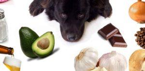Alimentos proibidos para o seu Cão ou Gato