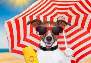 Queimaduras Solares e Cancro de Pele