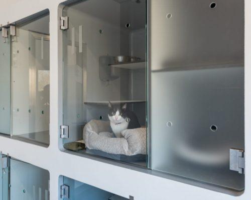 Alojamento Felino